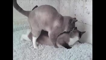 The cat porn