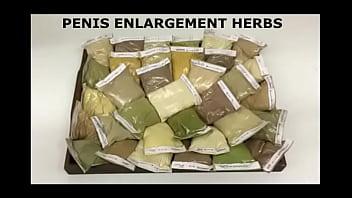 Herbs indian penis