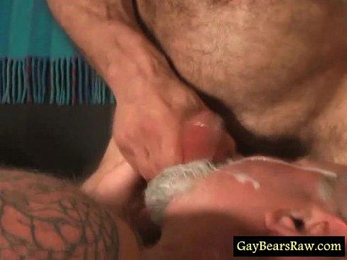 Hairy Bears Videos